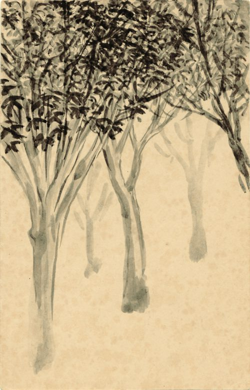 art2-mango trees